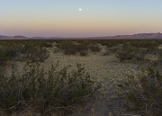 King Clone Creosote, Johnson Valley, CA (The Mojave Project)