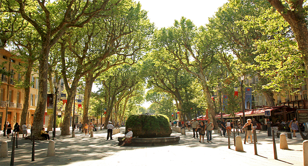 Wide walkway in France with towering green trees overhead