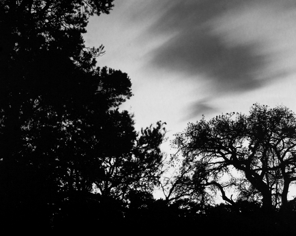 Silhouette of trees on against a gray sky