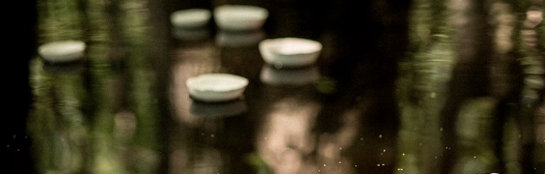 Photograph of white bowls floating in dark water